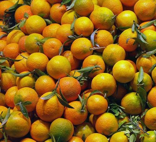 apelsiner-okt09
