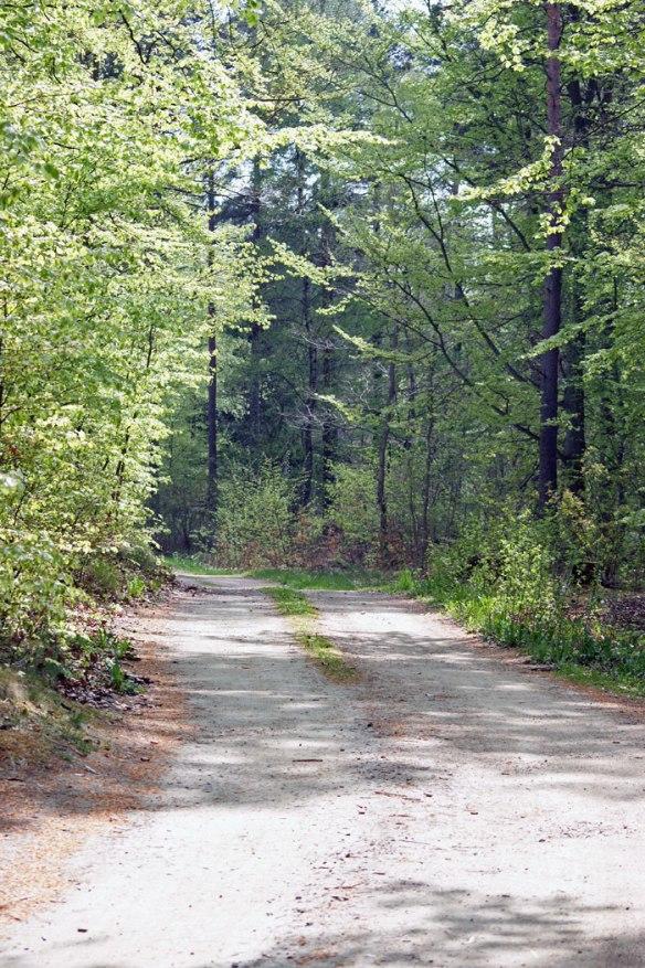 skogsvag